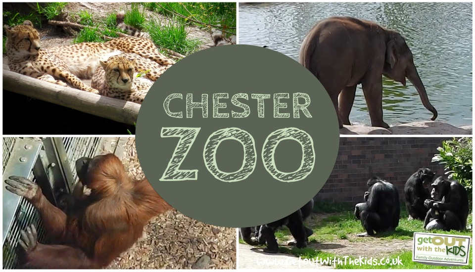 27.3.20 – Virtual Tour of Chester Zoo today at 10am.